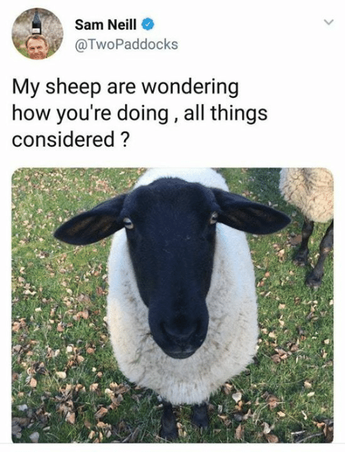 How, Sheep, and Sam: Sam Neill  @TwoPaddocks  My sheep are wondering  how you're doing, all things  considered?