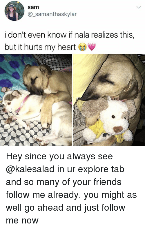 Friends, Memes, and Heart: sam  @_samanthaskylar  i don't even know if nala realizes this,  but it hurts my heart Hey since you always see @kalesalad in ur explore tab and so many of your friends follow me already, you might as well go ahead and just follow me now