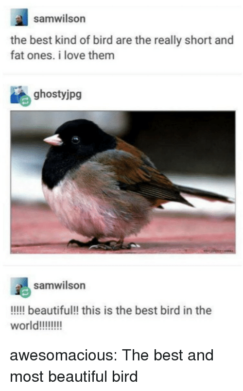 Beautiful, Love, and Tumblr: samwilson  the best kind of bird are the really short and  fat ones. i love them  ghostyjpg  samwilson  !!!!l beautiful!! this is the best bird in the awesomacious:  The best and most beautiful bird