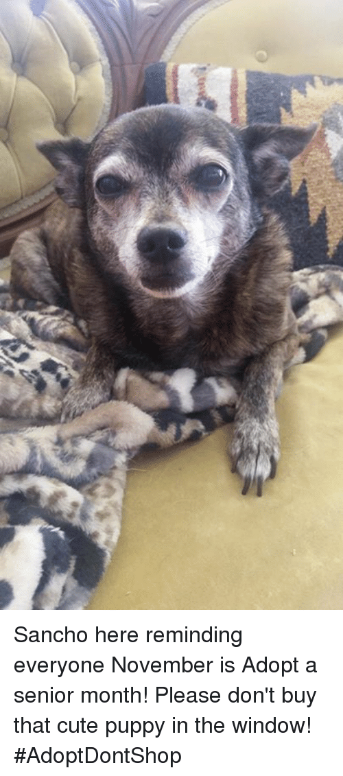 Cute, Memes, and Puppies: Sancho here reminding everyone November is Adopt a senior month!  Please don't buy that cute puppy in the window! #AdoptDontShop
