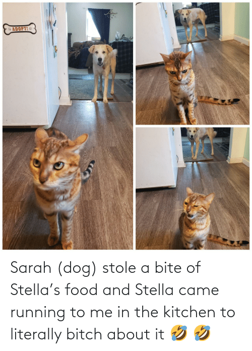 Bitch: Sarah (dog) stole a bite of Stella's food and Stella came running to me in the kitchen to literally bitch about it 🤣 🤣