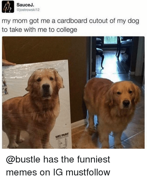 College, Dogs, and Funny: Sauce J.  ajostrowski12  my mom got me a cardboard cutout of my dog  to take with me to college  wETAINT @bustle has the funniest memes on IG mustfollow