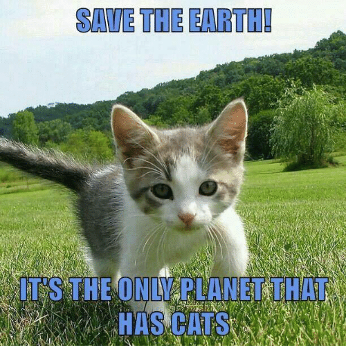 save the earth: SAVE THE EARTH!  IT'S THE ONLY PLANET THAT  HAS CATS