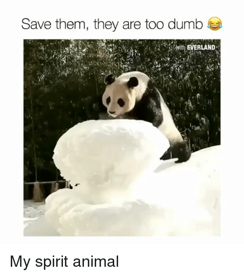 Dumb, Funny, and Animal: Save them, they are too dumb  -with EVERLAND My spirit animal