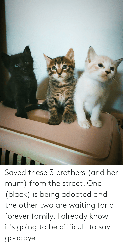 Family, Black, and Forever: Saved these 3 brothers (and her mum) from the street. One (black) is being adopted and the other two are waiting for a forever family. I already know it's going to be difficult to say goodbye