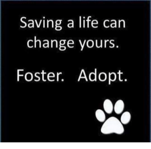 Life, Memes, and Change: Saving a life can  change yours  Foster. Adopt.