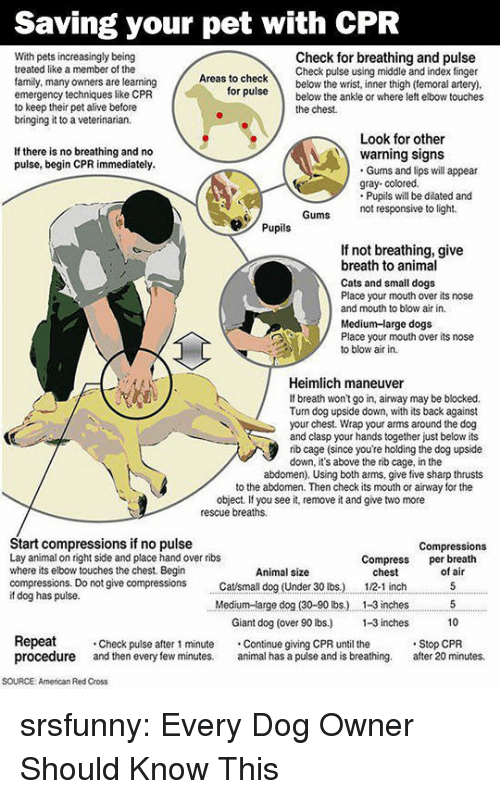 Alive, Cats, and Dogs: Saving your pet with CPR  With pets increasingly being  treated like a member of the  family, many owners are learning  emergency techniques like CPR  to keep their pet alive before  bringing it to a veterinarian.  Check for breathing and pulse  Check pulse using middle and index finger  as to checkbelow the wrist, inner thigh (temoral artery)  ruse below the ankle or where left elbow touches  for  the chest.  Look for other  If there is no breathing and no  pulse, begin CPR immediately.  warning signs  Gums and lips will appear  gray- colored.  Pupils will be dilated and  not responsive to light.  Pupils  If not breathing, give  breath to animal  Cats and small dogs  Place your mouth over its nose  and mouth to blow air in.  Medium-large dogs  Place your mouth over its nose  to blow air in.  Heimlich maneuver  If breath won't go in, airway may be blocked.  Tun dog upside down, with its back against  your chest. Wrap your arms around the dog  and clasp your hands together just below its  rib cage (since you're holding the dog upside  down, it's above the rib cage, in the  abdomen). Using both arms, give five sharp thrusts  to the abdomen. Then check its mouth or airway for the  object. If you see it, remove it and give two more  rescue breaths.  Start compressions if no pulse  Lay animal on right side and place hand over ribs  where its elbow touches the chest. Begin  compressions. Do not give compressions tsmall dog (Under 30 lbs.)  if dog has pulse.  Compressions  Compress per breath  Animal size  chest  12-1 inch  of air  Medium-arge dog (30-90 lbs.) . 1-3 inches5  10  Giant dog (over 90 lbs) -3 inches  Repeat  procedure and then every few minutes. al has a pulse and is breathing. after 20 minutes.  Check pulse after 1 minute Continue giving CPR until the  Stop CPR  SOURCE: American Red Cross srsfunny:  Every Dog Owner Should Know This