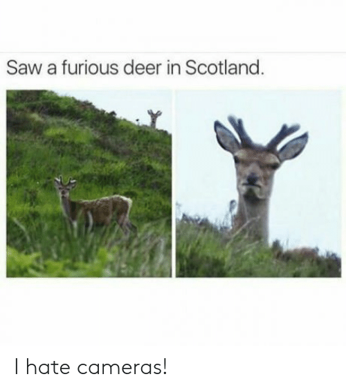 Deer, Saw, and Scotland: Saw a furious deer in Scotland I hate cameras!