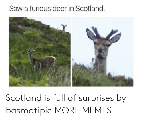 Dank, Deer, and Memes: Saw a furious deer in Scotland. Scotland is full of surprises by basmatipie MORE MEMES