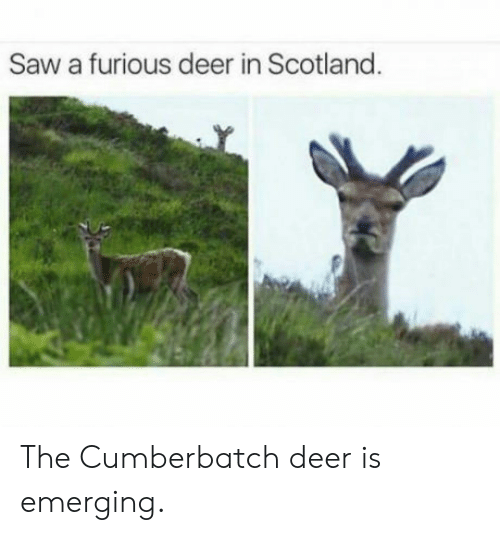 Deer, Saw, and Scotland: Saw a furious deer in Scotland The Cumberbatch deer is emerging.