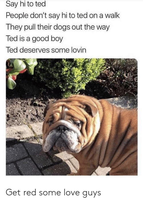 Dogs, Love, and Ted: Say hi to ted  People don't say hi to ted on a walk  They pull their dogs out the way  Ted is a good boy  Ted deserves some lovin Get red some love guys