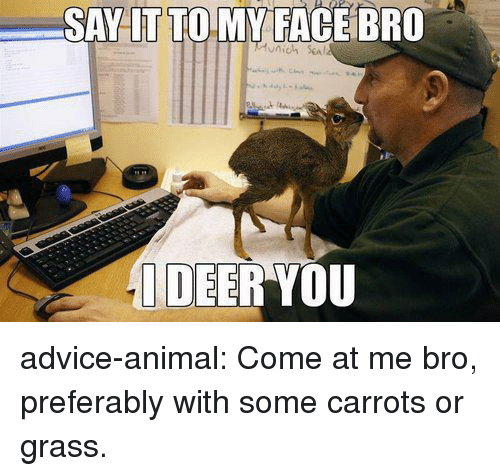 Advice, Deer, and Tumblr: SAY LT TO MY FACE BRO  DEER YOU advice-animal:  Come at me bro, preferably with some carrots or grass.