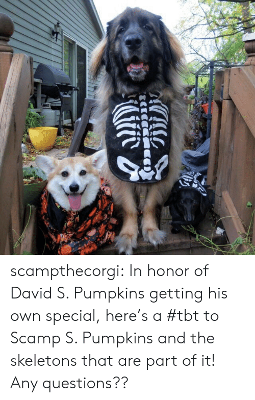 Tbt, Tumblr, and Blog: scampthecorgi:  In honor of David S. Pumpkins getting his own special, here's a #tbt to Scamp S. Pumpkins and the skeletons that are part of it! Any questions??