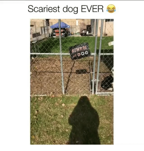 Memes, 🤖, and Dog: Scariest dog EVER  EWAR  DOG