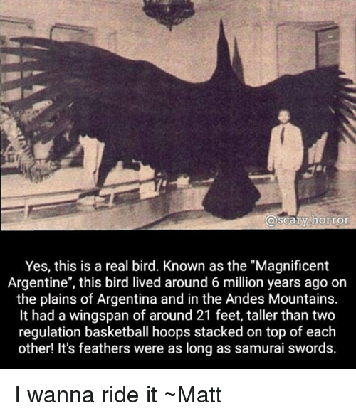 """andes: @scary horror  Yes, this is a real bird. Known as the """"Magnificent  Argentine"""", this bird lived around 6 million years ago on  the plains of Argentina and in the Andes Mountains.  It had a wingspan of around 21 feet, taller than two  regulation basketball hoops stacked on top of each  other! It's feathers were as long as samurai swords. I wanna ride it ~Matt"""