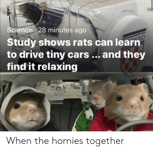 Learn To: Science 28 minutes ago  Study shows rats can learn  to drive tiny cars... and they  find it relaxing  OND  U/SwissChocolate0 When the homies together