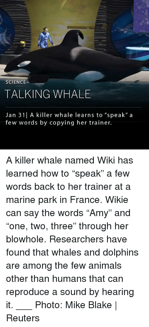 "Animals, Memes, and Dolphins: SCIENCE  TALKING WHALE  Jan 31| A killer whale learns to ""speak"" a  few words by copying her trainer. A killer whale named Wiki has learned how to ""speak"" a few words back to her trainer at a marine park in France. Wikie can say the words ""Amy"" and ""one, two, three"" through her blowhole. Researchers have found that whales and dolphins are among the few animals other than humans that can reproduce a sound by hearing it. ___ Photo: Mike Blake 