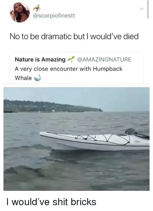 Funny, Shit, and Nature: @scorpiofinestt  No to be dramatic but I would've diec  Nature is Amazing @AMAZINGNATURE  A very close encounter with Humpback  Whale I would've shit bricks