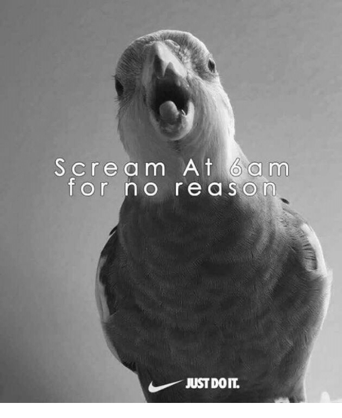 Scream, Just, and Doit: Scream At 6a mm  or no re a sorn  JUST DOIT.