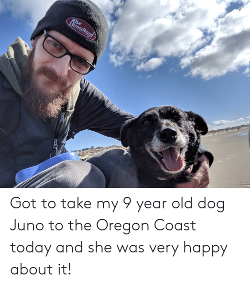Happy, Juno, and Oregon: se  Broadbo Got to take my 9 year old dog Juno to the Oregon Coast today and she was very happy about it!
