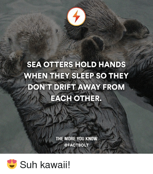 Memes, Otters, and The More You Know: SEA OTTERS HOLD HANDS  WHEN THEY SLEEP SO THEY  DON'T DRIFT AWAY FROM  EACH OTHER.  THE MORE YOU KNOW  @FACT BOLT 😍 Suh kawaii!
