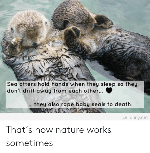 Otters, Death, and Nature: Sea otters hold hands when they sleep so they  don't drift away from each other..  t hey also rape baby seals to death.  LeFunny.net That's how nature works sometimes