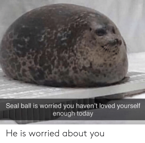 worried: Seal ball is worried you haven't loved yourself  enough today He is worried about you