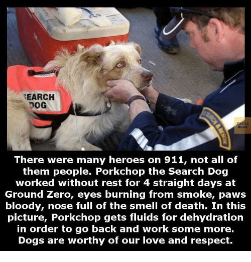 ground zeroes: SEARCH  Book  There were many heroes on 911, not all of  them people. Porkchop the Search Dog  worked without rest for 4 straight days at  Ground Zero, eyes burning from smoke, paws  bloody, nose full of the smell of death. In this  picture, Porkchop gets fluids for dehydration  in order to go back and work some more.  Dogs are worthy of our love and respect.