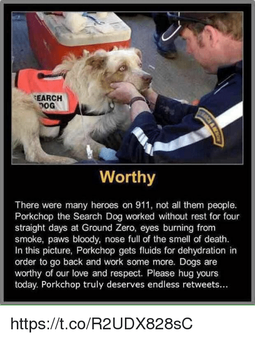 ground zeroes: SEARCH  Worthy  There were many heroes on 911, not all them people.  Porkchop the Search Dog worked without rest for four  straight days at Ground Zero, eyes burning from  smoke, paws bloody, nose full of the smell of death.  In this picture, Porkchop gets fluids for dehydration in  order to go back and work some more. Dogs are  worthy of our love and respect. Please hug yours  today. Porkchop truly deserves endless retweets... https://t.co/R2UDX828sC