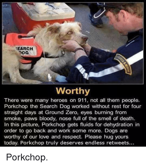 ground zeroes: SEARCH  Worthy  There were many heroes on 911, not all them people.  Porkchop the Search Dog worked without rest for four  straight days at Ground Zero, eyes burning from  smoke, paws bloody, nose full of the smell of death.  In this picture, Porkchop gets fluids for dehydration in  order to go back and work some more. Dogs are  worthy of our love and respect. Please hug yours  today. Porkchop truly deserves endless retweets... Porkchop.