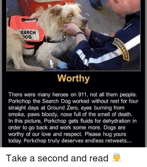 ground zeroes: SEARCH  Worthy  There were many heroes on 911, not all them people.  Porkchop the Search Dog worked without rest for four  straight days at Ground Zero, eyes burning from  smoke, paws bloody, nose full of the smell of death.  In this picture, Porkchop gets fluids for dehydration in  order to go back and work some more. Dogs are  worthy of our love and respect. Please hug yours  today. Porkchop truly deserves endless retweets... Take a second and read 👼