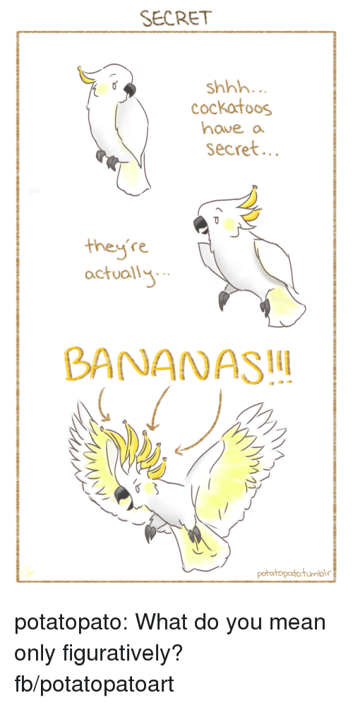figuratively: SECRET  shhh  cockatoos  haveo  secret  they're  actuall  BANANAS potatopato:  What do you mean only figuratively?fb/potatopatoart