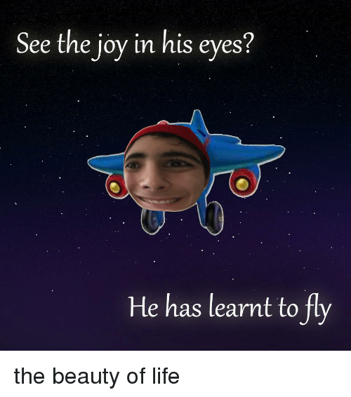Life, Joy, and Fly: See the joy in his eyes?  He has learnt to fly
