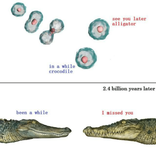 missed: see you later  alligator  in a while  crocodile  2.4 billion years later  I missed you  been a while