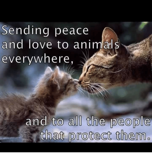 Anime, Memes, and 🤖: Sending peace  and love to animal S  everywhere  and to all the people  that protect them