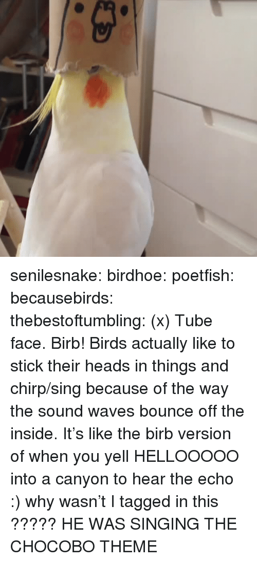 Singing, Target, and Tumblr: senilesnake:  birdhoe:  poetfish:  becausebirds:  thebestoftumbling:  (x)  Tube face.  Birb!    Birds actually like to stick their heads in things and chirp/sing because of the way the sound waves bounce off the inside. It's like the birb version of when you yell HELLOOOOO into a canyon to hear the echo :)  why wasn't I tagged in this ?????   HE WAS SINGING THE CHOCOBO THEME