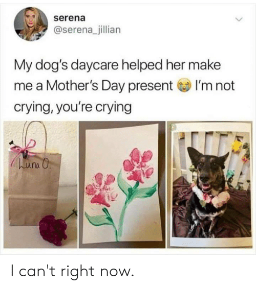 serena: serena  @serena_jillian  My dog's daycare helped her make  me a Mother's Day presentI'm not  crying, you're crying I can't right now.