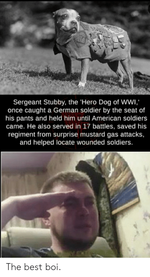 Soldiers: Sergeant Stubby, the 'Hero Dog of Wwi  once caught a German soldier by the seat of  his pants and held him until American soldiers  came. He also served in 17 battles, saved his  regiment from surprise mustard gas attacks,  and helped locate wounded soldiers. The best boi.