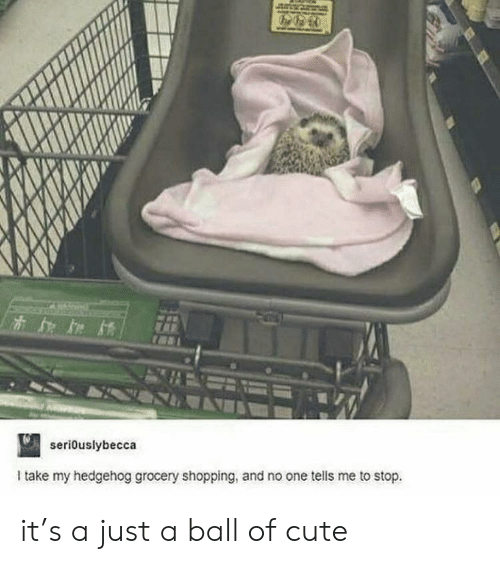 Cute, Shopping, and Hedgehog: seriouslybecca  Itake my hedgehog grocery shopping, and no one tells me to stop. it's a just a ball of cute
