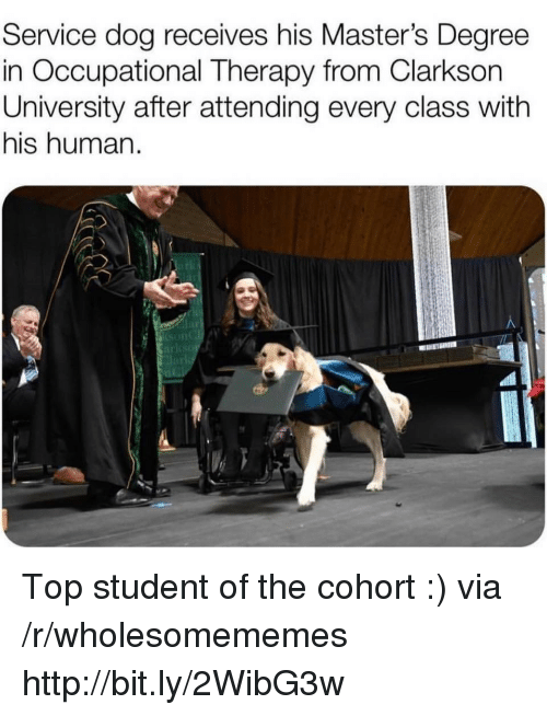 Http, Masters, and Dog: Service dog receives his Master's Degree  in Occupational Therapy from Clarkson  University after attending every class with  his human.  lar Top student of the cohort :) via /r/wholesomememes http://bit.ly/2WibG3w