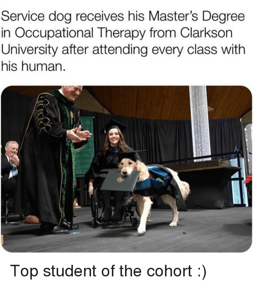 Masters, Dog, and Human: Service dog receives his Master's Degree  in Occupational Therapy from Clarkson  University after attending every class with  his human.  lar Top student of the cohort :)