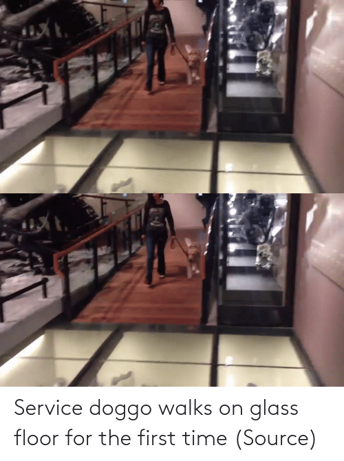 the first time: Service doggo walks on glass floor for the first time(Source)