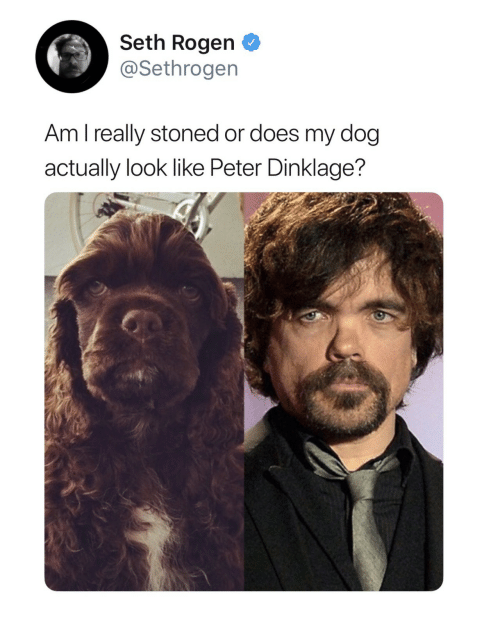 Seth Rogen, Peter Dinklage, and Dog: Seth Rogen  @Sethrogen  Am l really stoned or does my dog  actually look like Peter Dinklage?