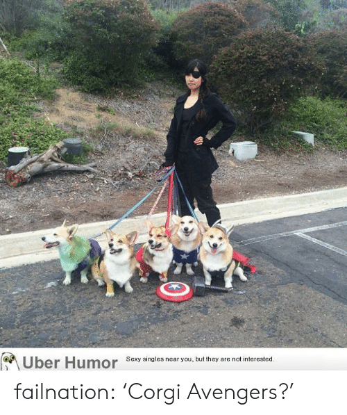Corgi, Sexy, and Tumblr: Sexy singles near you, but they are not interested.  Uber Humor failnation:  'Corgi Avengers?'