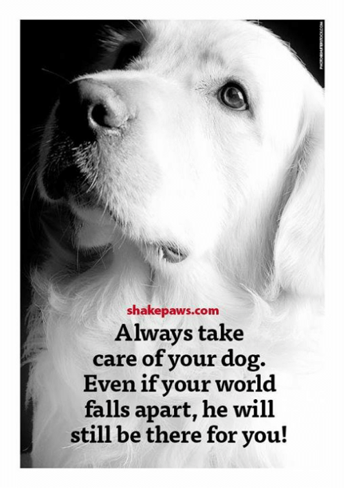 Memes, World, and 🤖: shakepaws.com  Always take  care of your dog.  Even if vour world  falls apart, he will  still be there for you!