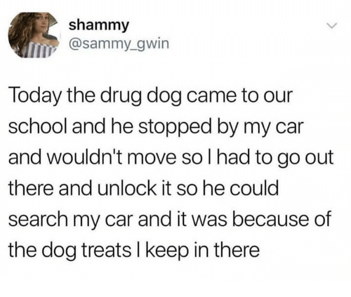 Dank, School, and Search: shammy  @sammy_gwin  Today the drug dog came to our  school and he stopped by my car  and wouldn't move so I had to go out  there and unlock it so he could  search my car and it was because of  the dog treats l keep in there