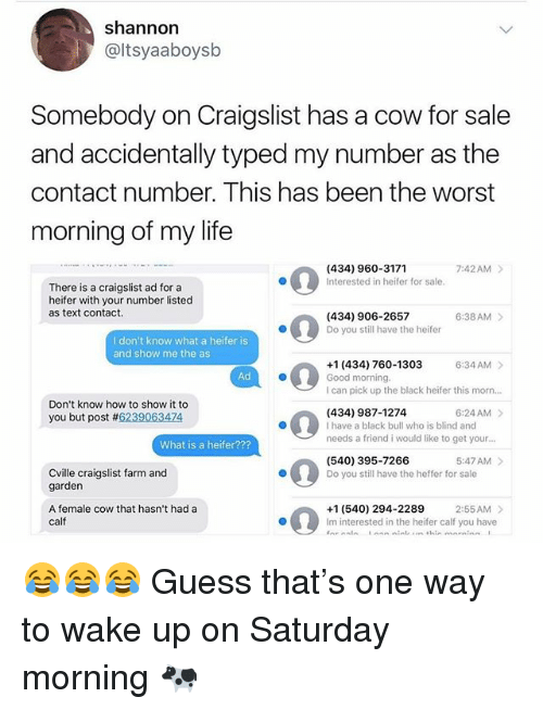 Craigslist, Life, and Memes: shannon  @ltsyaaboysb  Somebody on Craigslist has a cow for sale  and accidentally typed my number as the  contact number. This has been the worst  morning of my life  (434) 960-3171  Interested in heifer for sale  7:42AM >  There is a craigslist ad for a  heifer with your number listed  as text contact.  6:38AM  (434) 906-2657  Do you still have the heifer  I don't know what a heifer is  and show me the as  6:34 AM  +1 (434) 760-1303  Good morning.  I can pick up the black heifer this morn...  Ad  Don't know how to show it to  you but post #6239063474  (434) 987-1274  I have a black bull who is blind and  needs a friend i would like to get your...  6:24AM >  What is a heifer???  5:47AM>  (540) 395-7266  Do you still have the heffer for sale  Cville craigslist farm and  garden  A female cow that hasn't had a  calf  +1 (540) 294-2289  Im interested in the heifer calf you have  5020  2:55AM> 😂😂😂 Guess that's one way to wake up on Saturday morning 🐄