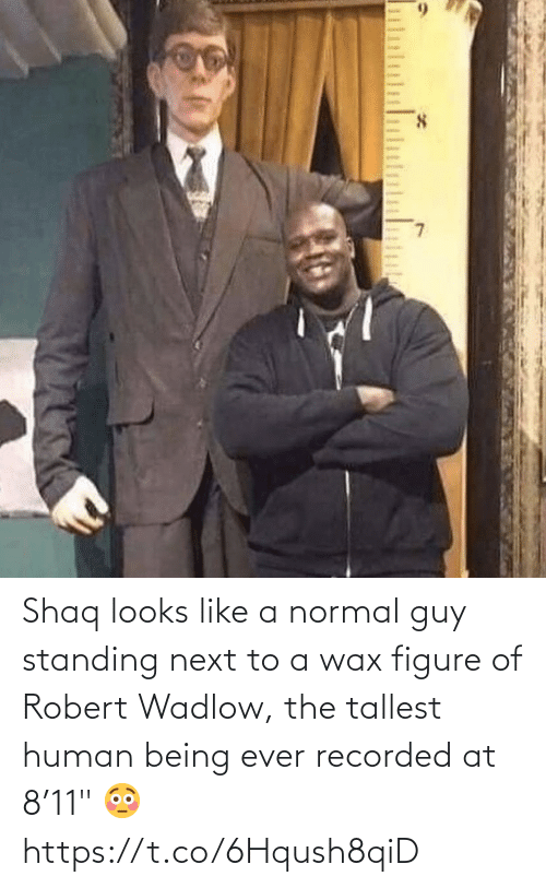 "wax: Shaq looks like a normal guy standing next to a wax figure of Robert Wadlow, the tallest human being ever recorded at 8'11"" 😳 https://t.co/6Hqush8qiD"