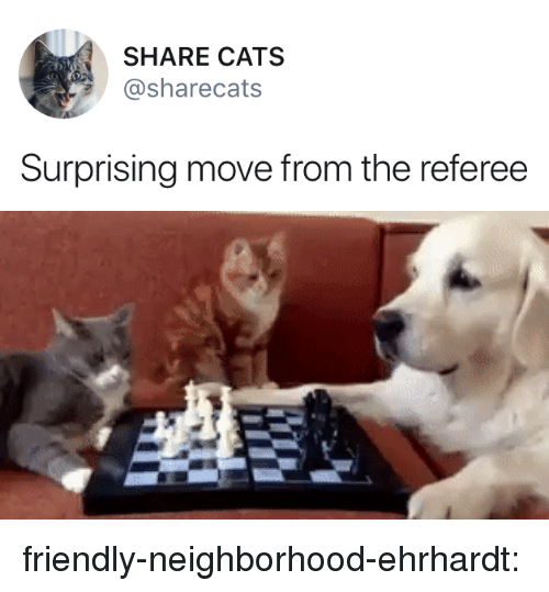 Cats, Target, and Tumblr: SHARE CATS  sharecats  Surprising move from the referee friendly-neighborhood-ehrhardt: