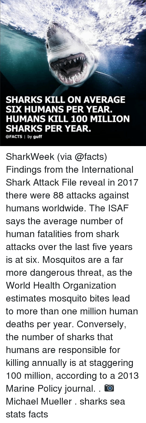mosquitos: SHARKS KILL ON AVERAGE  SIX HUMANS PER YEAR.  HUMANS KILL 100 MILLION  SHARKS PER YEAR.  @FACTS I by guff SharkWeek (via @facts) Findings from the International Shark Attack File reveal in 2017 there were 88 attacks against humans worldwide. The ISAF says the average number of human fatalities from shark attacks over the last five years is at six. Mosquitos are a far more dangerous threat, as the World Health Organization estimates mosquito bites lead to more than one million human deaths per year. Conversely, the number of sharks that humans are responsible for killing annually is at staggering 100 million, according to a 2013 Marine Policy journal. . 📷 Michael Mueller . sharks sea stats facts
